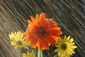 fiori e pioggia